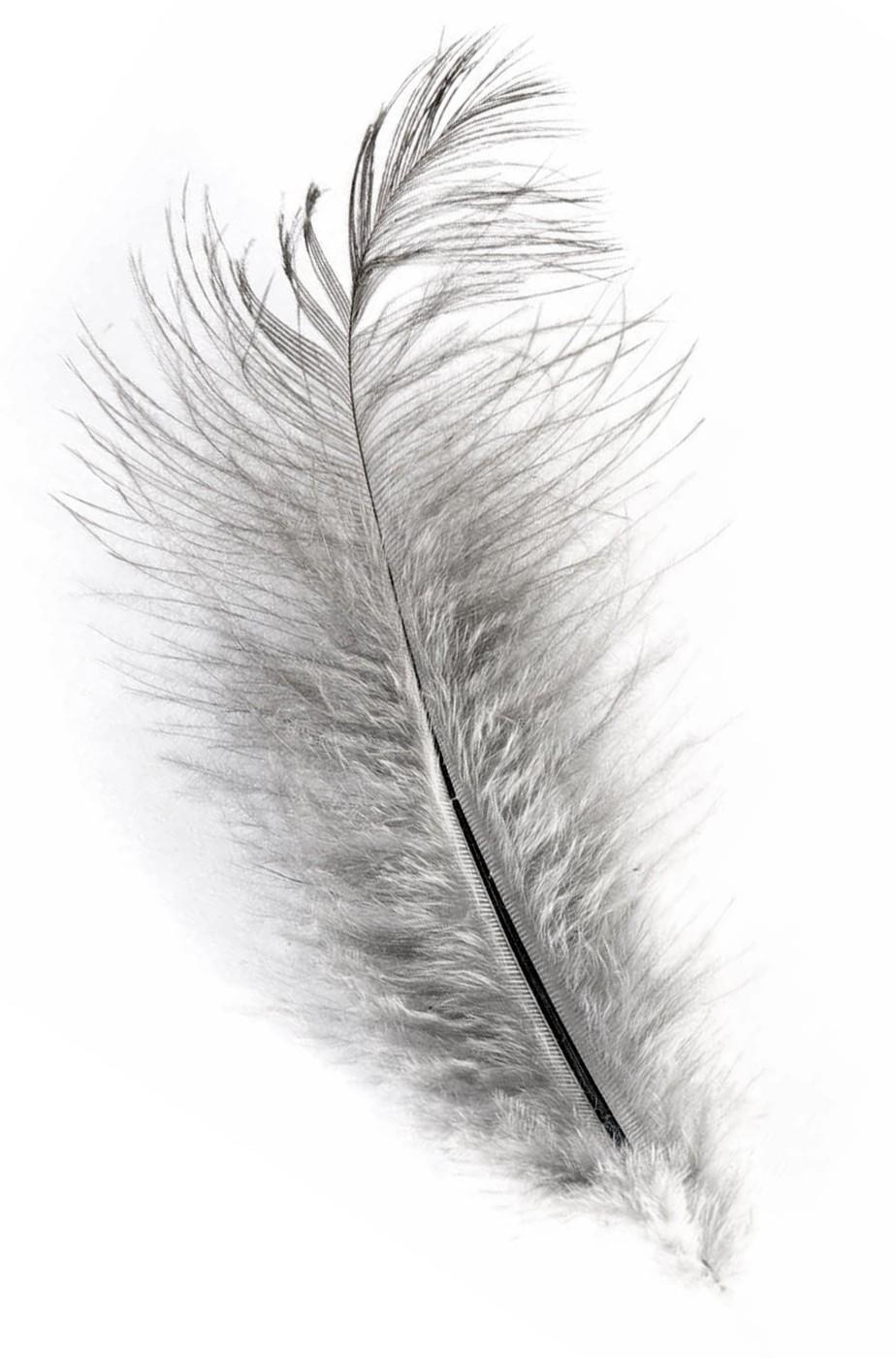 Piuma di struzzo Grigia