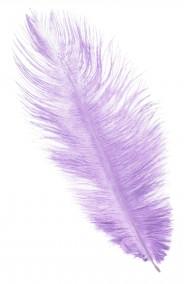 Piuma di struzzo Lilla Viola