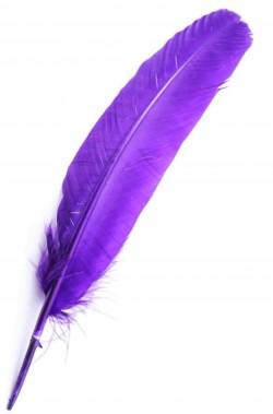 Piuma singola per indiano pellerossa viola