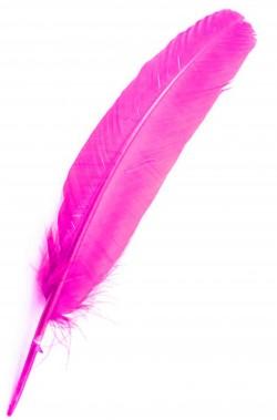 Piuma singola per indiano pellerossa rosa