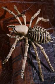 Allestimento decorazione Halloween Scheletro di Ragno Tarantola
