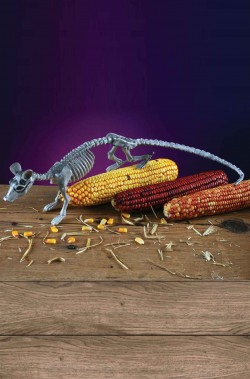 Allestimento decorazione Halloween scheletro di topo o ratto 40cm