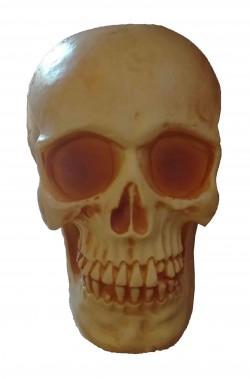 Teschio in plastica dimensione naturale 19x14cm ambrato