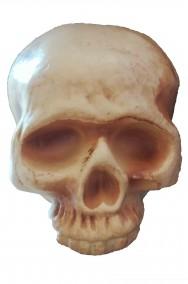 Teschio in plastica dimensione naturale 19x14cm senza mandibola