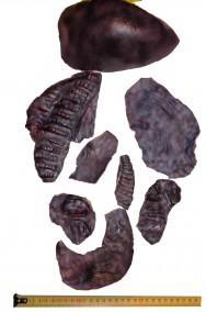 Set di brandelli di pelle horror in lattice per trucco halloween