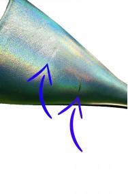 Scarpe azzurre per Cenerentola