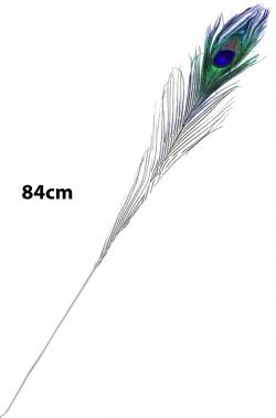 Piuma di Pavone lunga 84cm...