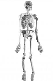 decorazione Halloween scheletro da appendere fosforescente