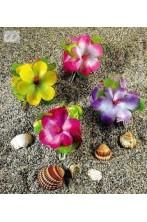 molletta hawaiana