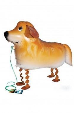 Animaletto gonfiabile che cammina: cagnolino golden retriever